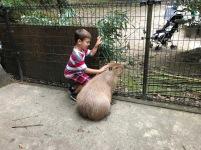 Capybara!